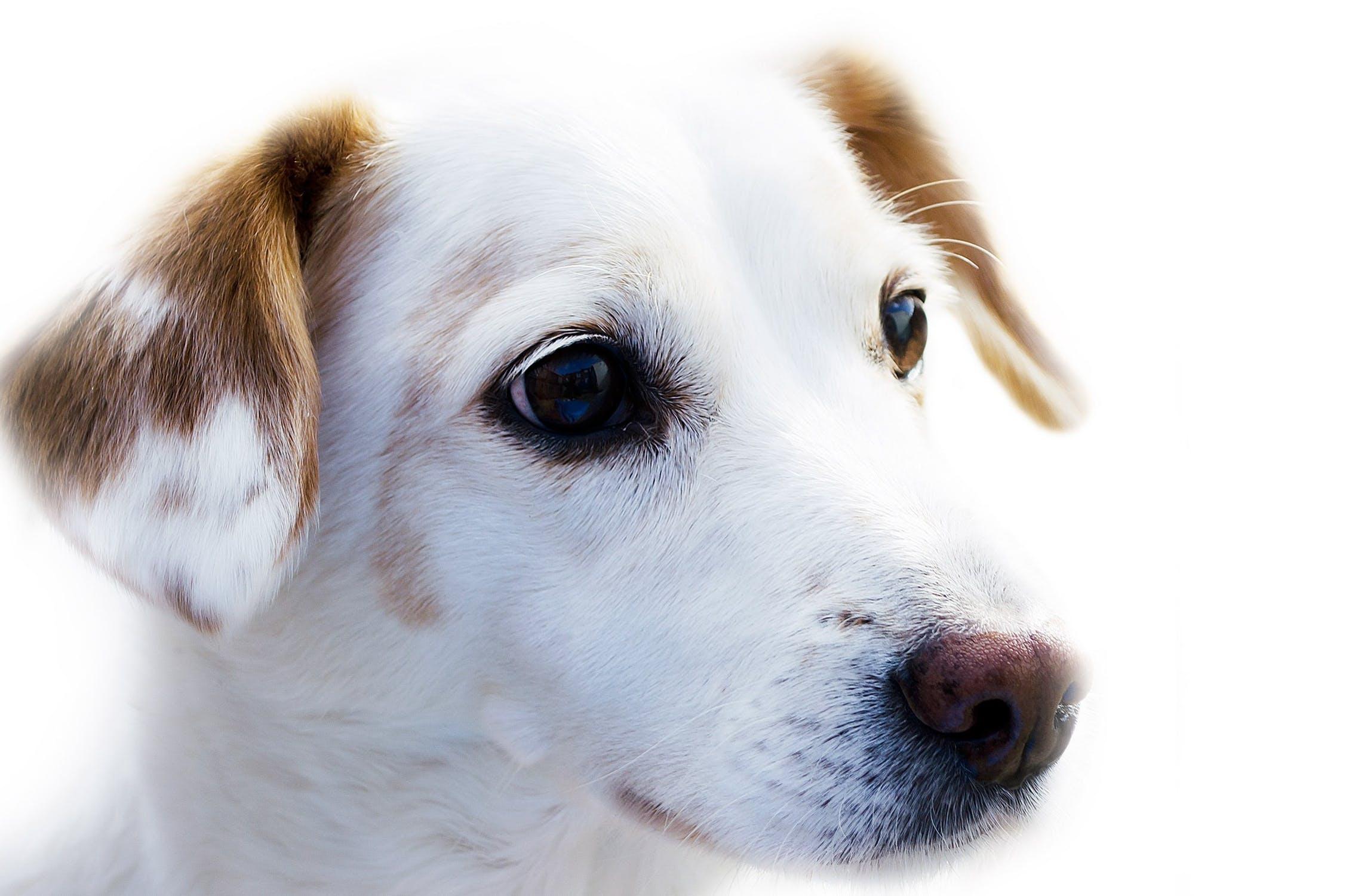 dog animal friend loyalty 67304 - National Dog Day 2018