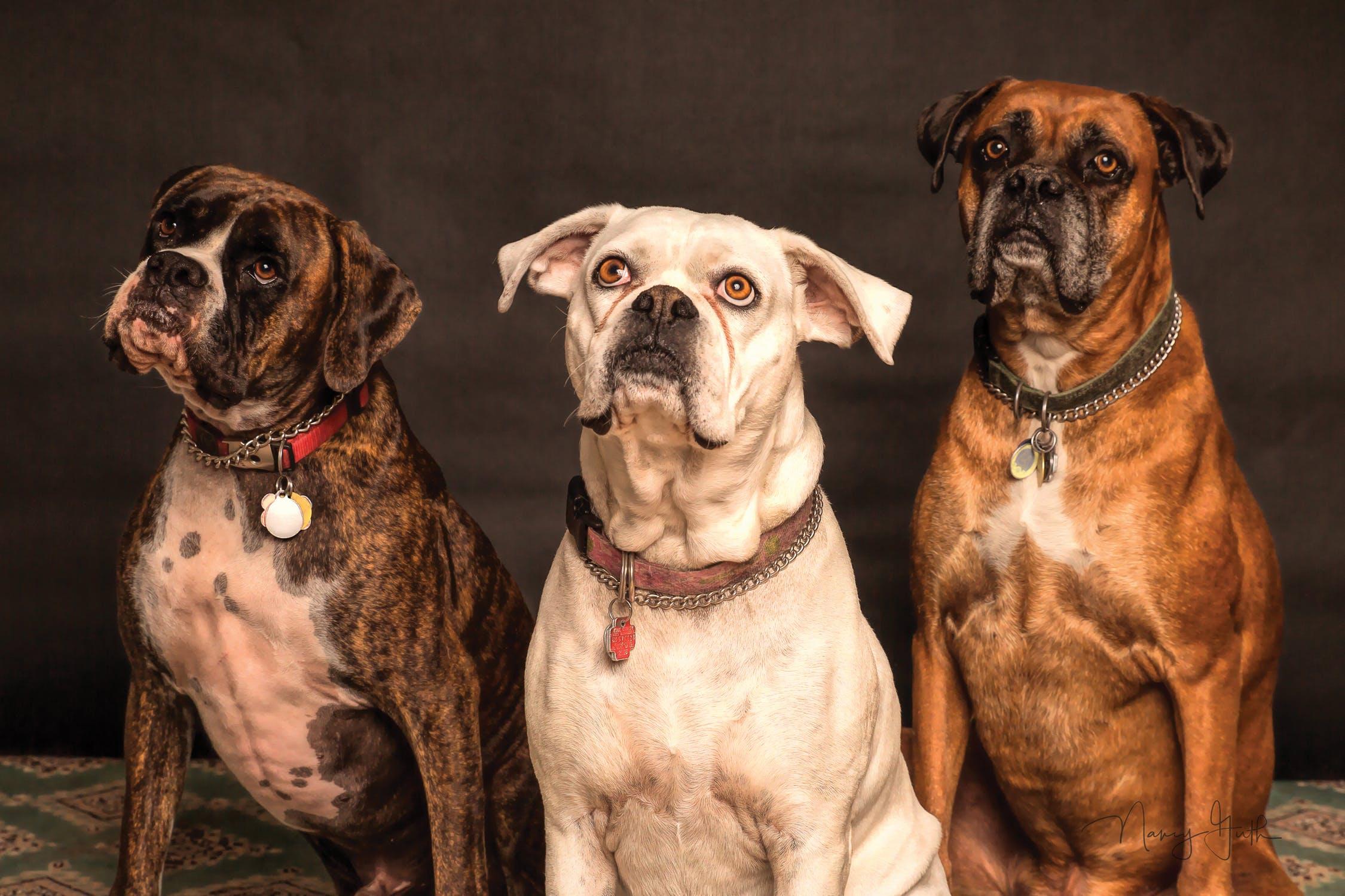 pexels photo 850602 1 - National Dog Day 2018